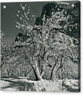 Half Dome, Apple Orchard, Yosemite Acrylic Print