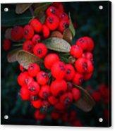Happy Berries Acrylic Print