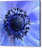 Harmony Blue Acrylic Print