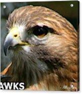Hawks Mascot 2 Acrylic Print