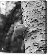 Heart On A Tree Acrylic Print
