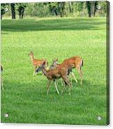 Herd Of Deer Acrylic Print