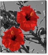 Hibiscus Selective Color Acrylic Print