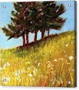 Hillside Evergreens Acrylic Print