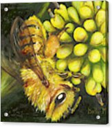 Honey Bee On Wild Golden Glow Acrylic Print