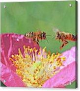 Honeybees Acrylic Print