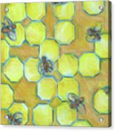 Honeycomb Acrylic Print