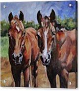 Horse Art  Acrylic Print
