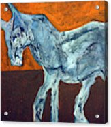 Horse On Orange Acrylic Print