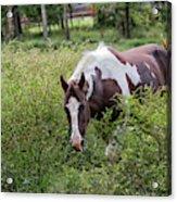 Horse Print 578 Acrylic Print