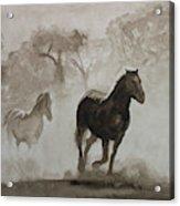 Horses In The Mist Acrylic Print