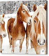 Horses In White Winter Landscape Acrylic Print