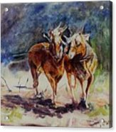 Horses On Work Acrylic Print