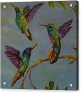 Humming Birds Acrylic Print