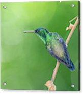 Hummingbird Abyss Acrylic Print
