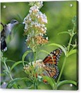 Hummingbird And Monarch Acrylic Print