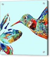 Hummingbird Blue - Sharon Cummings Acrylic Print