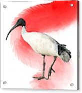 I Is For Ibis Acrylic Print