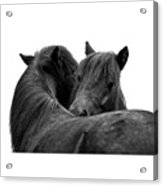 I Just Need A Hug. The Black Pony Bw Transparent Acrylic Print
