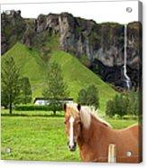 Icelandic Horse And Waterfall, Vik Acrylic Print
