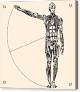 Ideal Human Proportion That Governs The Acrylic Print