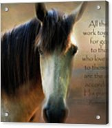 If Horses Could Talk - Verse Acrylic Print