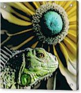 Iguana And Sunflower Acrylic Print