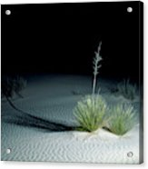 Illuminated Yucca At Night In White Sands National Monument, New Mexico - Newm500 00110 Acrylic Print