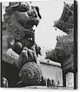 Imperial Lion  Beijing    Acrylic Print
