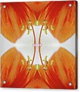 Inside An Amaryllis Flower Acrylic Print