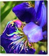 Iris Osirus Acrylic Print