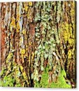 Island Moss Acrylic Print