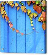 Ivy On The Door Acrylic Print
