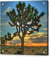 Joshua Tree At Sunrise Acrylic Print