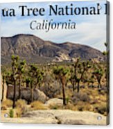 Joshua Tree National Park Valley, California Acrylic Print