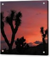 Joshua Trees Silhouetted Against A Red Sky Acrylic Print