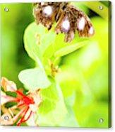 Jungle Bug Acrylic Print