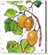 Kiwi Acrylic Print