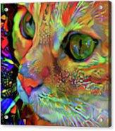 Koko The Orange Cat Acrylic Print