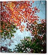 Kuhonbutsu In Autumn Acrylic Print