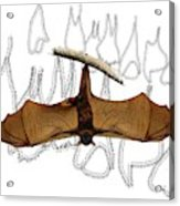 L Is For Little Red Flying Fox Acrylic Print