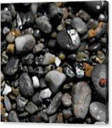 Beach Bug  Acrylic Print