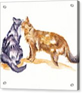 L'amour - Cats In Love Acrylic Print