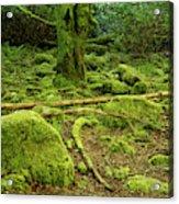 Landscape At Torc Waterfalls Acrylic Print