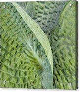 Laughing Leaves Acrylic Print