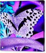 Lavender Butterfly Acrylic Print