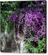 Lavender Pot Acrylic Print