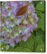Leaf And Pink Acrylic Print