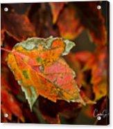 Leaf Acrylic Print