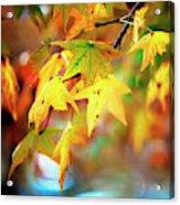 Leaf Therapy Acrylic Print